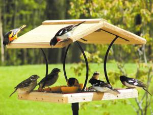 optics den birding