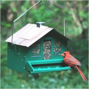 optics den birding binoculars 3