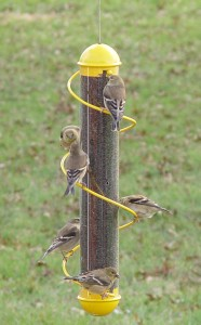 optics den birding thistle feeder