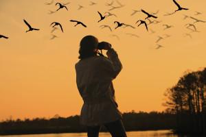 optics den birding binoculars 4