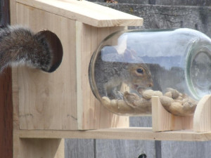 optics den birding squirrel in jar feeder